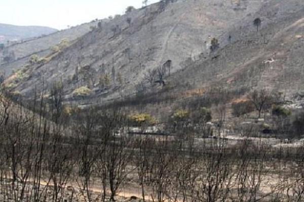 Imagem de uma floresta queimada