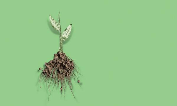 Imagem da raíz de um árvore fora da terra